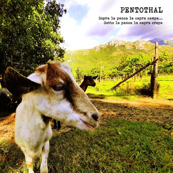 pentothal_capra_top